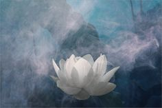White Lotus Flower Surreal Series Please view on Pure Black Lotus Flower Images, White Lotus Flower, Finding Peace, Water Lilies, Flower Designs, Surrealism, Design Art, Fairy Tales, Photos