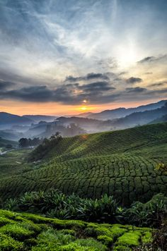 Cameron Highlands, Malaysia, by Photographer Gary Yip. Places Around The World, Around The Worlds, Cameron Highlands, Nature Pictures, Beautiful Pictures, Heaven On Earth, Vacation Spots, Beautiful World, Mother Nature