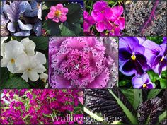 Edible Flowers: The Color Purple, Monochromatic Edible Container Garden DIY instrux.