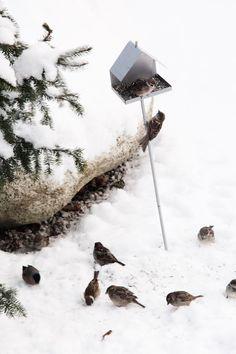 Snowy Birds via Dos Family