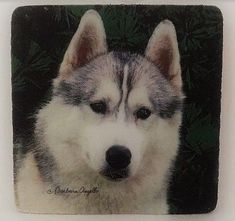 SIBERIAN HUSKY DOG COASTERS ~ FOUR COASTERS IN SET