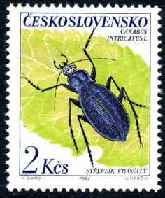 Insects : Strevlik vrascity - Carabus Intricatus L. Stamp   printed in Czechoslovakia 1962.