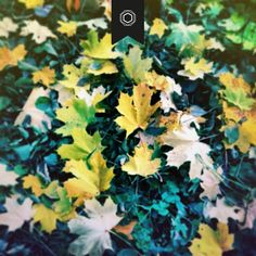 leaves Leaves, Plants, Jewelry, Jewels, Schmuck, Flora, Jewerly, Jewelery, Jewlery