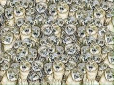 А теперь предлагаем немного отдохнуть и ненадолго отвлечься от дел! Тем более, Интернет подготовил для вас ещё один забавный тест на внимательность! На этой картинке постарайтесь разглядеть кошку...