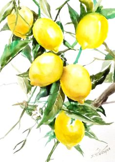 Lemons original watercolor painting 12 X 9 in by ORIGINALONLY, $36.00