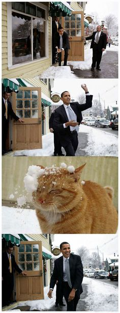 I like Obama and cats, but this just made me laugh.