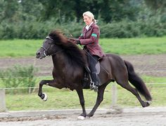 "Aegidienberger. The Aegidienberger is a small gaited riding horse from Germany. Like the Icelandic horse, it can naturally perform a gait known as the tölt. They were developed in Aegidienberg and first recognized as a breed in 1994. Marlies mit ihrem ""alten"" Pescador"