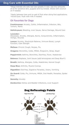 I bet you didnt know your essential oils could benefit your furry friend too!! Dog reflexology points...