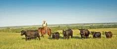 Techniques of low-stress livestock handling