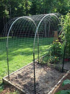 Bean Trellis, Diy Trellis, Garden Trellis, Potager Garden, Vertical Vegetable Gardens, Vegetable Garden Design, Diy Garden, Garden Beds, Vegetable Gardening