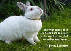 Twitter / bunnybuddhism: Moment of #bunniness ...