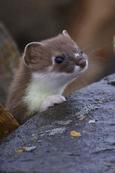 """""""Ferret Face"""" is actually a compliment. Love this guy!"""