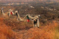 Kebakaran Lahan di Ogan Ilir Tak Terdeteksi Sistem Titik Panas?