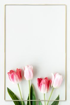 Tulips wallpaper shared by Madinabonu on We Heart It