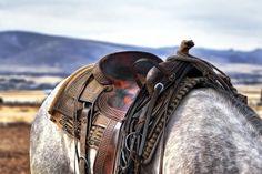 Sela, Cavalo, Vaqueiro, Ocidental, País, Animal