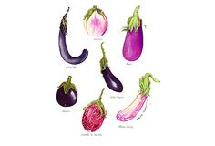 """A variation of my """"if I were single"""" colors for kitchen, springing up to break up a lot of white, a lot of stainless; use textiles, too. Marika Hahn, Purple Veggie Family on OneKingsLane.com"""