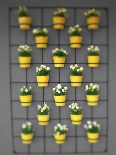 Dish of Design: Vertical Garden