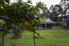 A blurred background which shows the property and house. The Orange tree is in focus highlighting the fact that they grow and eat their own produce. Very vibrant bright image. Either this or the wide angle without the tree will be used in final series.
