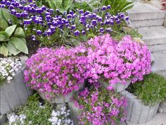 Moja záhrada  jar 2014
