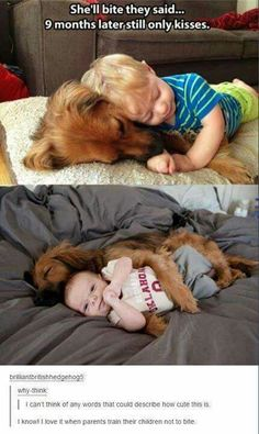 Animals Discover Love my dog Love My Dog Puppy Love Funny Shit Funny Cute Funny Stuff Hilarious Memes Baby Animals Funny Animals Cute Animals Baby Animals, Funny Animals, Cute Animals, Animal Funnies, Animal Memes, Wild Animals, Cute Puppies, Cute Dogs, Animal Pictures