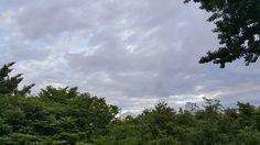 웃어야 할 장마인지, 잔뜩 흐린 하늘 아래 대한민국 국회 돔