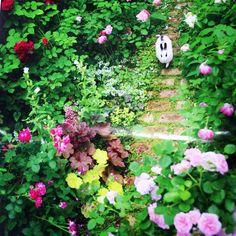 Garden Rose rabbit