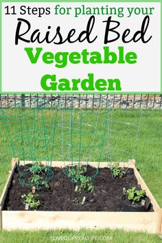 Small raised bed garden for tomatoes, cucumbers, cilantro, and sweet mint OR other veggies you love.