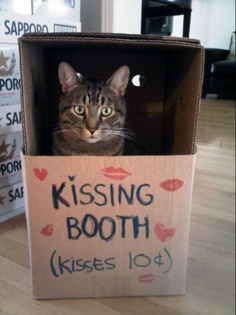 Kissing booth she says...oh it would be so cute she says....yeah! More like hissing booth when im done! Then we sees who cute and fun!