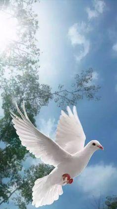 A dove in flight Pretty Birds, Beautiful Birds, Beautiful Images, Animals Beautiful, Dove Pictures, Bird Pictures, Nature Pictures, Pictures Of Jesus Christ, Names Of Artists