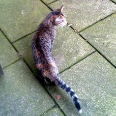 katzen entlaufen - unterbilk