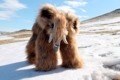 baby wooly mammoth