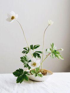 modern spring ikebana arrangement with white anemones Ikebana Arrangements, Ikebana Flower Arrangement, Wedding Flower Arrangements, Wedding Centerpieces, Floral Arrangements, Wedding Flowers, Tall Centerpiece, Wedding Tables, Centrepieces