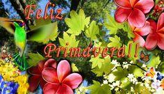 Feliz Dia de la Primavera, parte 1 Herbs, Spring, Plants, Google, Facebook, Frases, Happy Spring, Spring Flowers, Pictures Of Flowers