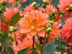Easy Garden Decor Ideas #gardening #garden #DIY #home #flowers #roses #nature #landscaping #horticulture