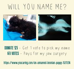 This unnamed Bosnian rescue pup needs our help!! He was abused by cruel people and now needs jaw surgery so he can eat.... every $5 donation makes 1 vote to pick his name...let's #savebosnianstrays!!