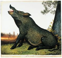 Of all the domesticated animals, none become feral more readily, or survive better in the wild, than the hog. Walton Ford, Boar Hunting, Snow Art, Alien Creatures, Wild Boar, Animal Totems, Animal Paintings, Natural History, Pet Portraits