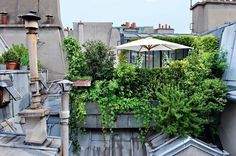 How awesome is this little roof garden?
