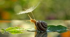 20 magical pictures that will change the way you think about snails