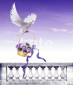 Find More Background Information about Children Studio Props Photography Background Backdrops Paece Dove Flowers Basket Sky Cloud Background Backdrop,High Quality basket wall,China backdrop board Suppliers, Cheap basket muzzle from Background design room Store on Aliexpress.com