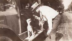 1920 C.H. Border Terrier, Vintage Dog, Dogs, People, Art, Art Background, Kunst, Performing Arts, People Illustration