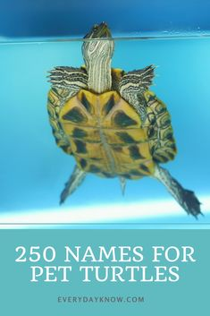New Cost-Free turtles pet names Strategies Youngsters use a healthy affinity for the entire world all-around all of them, therefore it is no surprise wh Small Turtles, Cute Turtles, Baby Turtles, Animals And Pets, Funny Animals, Cute Animals, Farm Animals, Cute Pet Names, Names For Pets
