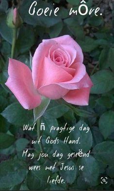 Lekker Dag, Good Morning Images Flowers, Goeie Nag, Goeie More, Empowering Quotes, In The Flesh, Blessed, Plants, Afrikaans