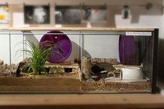 Ikea Detolf glass case turned terrarium!