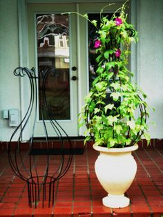 Love this idea. New Orleans Hurricane Wrought Iron Trellis Topiary by Theironsmith Wrought Iron Trellis, Wrought Iron Decor, Garden Trellis, Garden Pots, Balcony Garden, Outdoor Plants, Outdoor Gardens, Indoor Gardening, Amazing Gardens