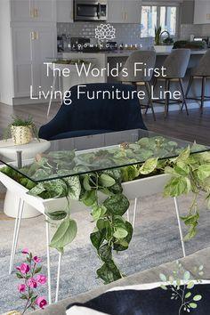 Living Furniture, Home Furniture, New Living Room, Living Spaces, Vogue Home, Lexington Home, Starter Home, Apartment Living, Botany