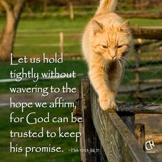 Let us hold tightly without wavering to the hope we affirm, for God can be trusted to keep his promise. - Hebrews 10:23