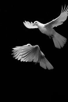 dove peace and purity The olive branch is a more proactive expression of peace than the dove because it involves human interaction.