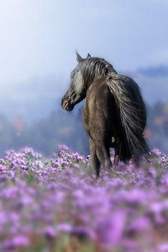 Horse in purple flower field.