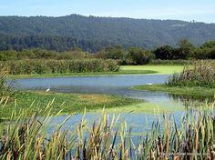 Arcata Marsh- waste water treatment plant