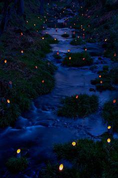 Bamboo Light Festival in Kouzuke, Nachikatsuura, Wakayama, Japan Festivals Around The World, Places Around The World, Around The Worlds, Wakayama, Kyushu, Oita, Places To Travel, Places To See, Travel Destinations